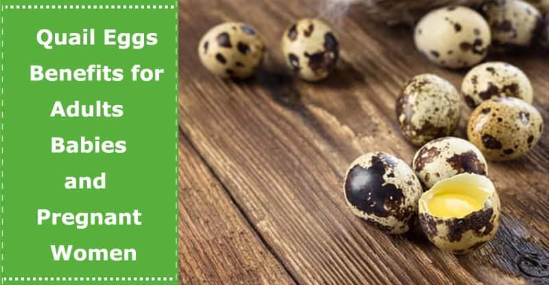 quail eggs benefits to babies regnant women